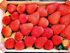 #Everybody #HappyWeekend #Sweet #Treats (RenateEurope) Tags: renateeurope ipadair2 iphoneography organic delicious juicy red strawberries erdbeeren fruits everybody happyweekend