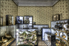 Calke Abbey (11) (Darwinsgift) Tags: calke abbey derbyshire hdr interior national trust zeiss distagon 15mm t f28 photomatix nikon d810 taxidermy stately home house estate