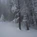 White dreams II (emil.rashkovski) Tags: wood tree trees fog mountain outdoor nature mist mystic