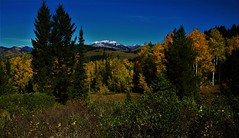 Fall Color in the Bridgers (The VIKINGS are Coming!) Tags: fall colors alpine forest sky wilderness animals deer elk bare eagles hawks
