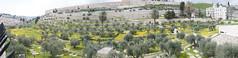 000 Lato orientale del Monte del Tempio vista dal Monte degli Olivi2 (Teodor Ion) Tags: terrasanta gerusalemme montesion israeljerusalem templemount oldcityofjerusalem