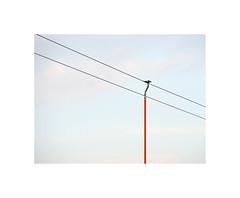 2040420 (ufuk tozelik) Tags: ufuktozelik wire sky urban sailing stick cablecar cable pulley orange park sazova