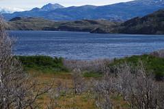 imgp3606 (Mr. Pi) Tags: trees lake deadwood mountains hills chile andes nationalpark patagonia dead torresdelpaine lagoskottsberg