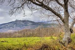 Nieve en Peña Negra (mibagui22) Tags: pradera montaña bosque nieve peñanegra béjar salamanca hdr miguelbarrios roble ladera