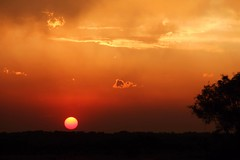 The End of the Day (Elizabeth Budd) Tags: light sunset red sky orange sun sunlight west color tree nature silhouette yellow night clouds rural sunrise canon landscape outside outdoors golden evening spring rust texas vivid nighttime nightsky lovely canon60d elizabethbudd