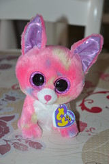 Little Chihuahua (Aurelmistinguette) Tags: chihuahua little fluffy plush collection petit mignon peluche kawa aurelmistinguette