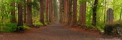 O n e H u n d r e d Y e a r s (AnthonyGinmanPhotography) Tags: trees panorama japan shrine olympus f28 pathway naganoprefecture novoflex togakushi 1454 olympuse620