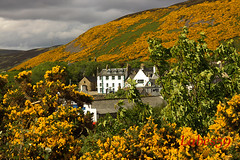 Helmsdale Gold (Labes59) Tags: uk scotland europe united kingdom sutherland helmsdale
