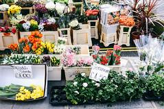 flowers (f x d b b b t) Tags: uk greatbritain travel england streets london fuji fujifilm x100 2013