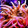 aquarium_purple