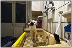 Poes (Michael Neeven) Tags: pet water yellow cat movement kat sink pussy gimme drip tap geel huisdier poes beweging kraan gootsteen druppelen
