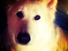 Soppy Dog (roxy_foster) Tags: dog utonagan