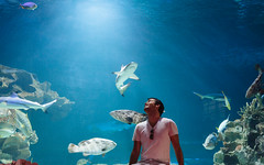 Amazed (Nomadic Vision Photography) Tags: winter portrait thailand aquarium underwater lifestyle chiangmai travelphotography chiangmaizoo jonreid northernthai tinareid nomadicvisioncom