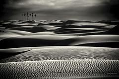Midnight at the Oasis (Steve Corey) Tags: ca light palms desert sandy oasis sandunes oceano mariamuldaur midnightattheoasis stevecorey