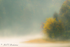 Thick Morning Fog! (Rick Smotherman) Tags: wood morning autumn trees sky tree fall nature water leaves sunrise canon landscape outdoors morninglight october cloudy fallcolors wildlife overcast 7d cloudysky buschwildlife canon7d canon1585mmlens