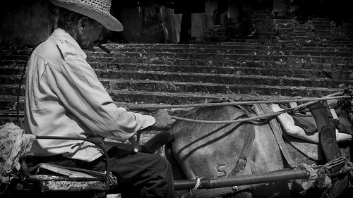 Cuban farmer on cart and horse