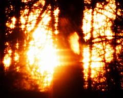 Tree On Fire AE TM PS E4 8 x 10 (Michael A Tipton) Tags: nc charlotte treeonfire michaelatipton