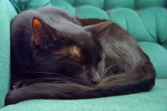 Andy Deserves Rest (+David+) Tags: andy blackcat resting iso6400 darkondark