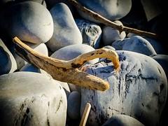 Clawing back, Drift wood (technodean2000) Tags: wood beach wales nikon south pebbles claw barry drift aberthaw d5100