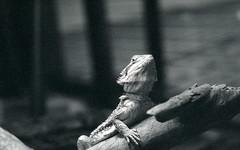 animula vagula blandula (Max Miedinger) Tags: blackandwhite film museum death skull stuffed nikon slide dia 1600 trento scala epson f3 pushed nikkor agfa expired developed luce agfascala biancoenero trieste agenzia v500 rullino taxydermy blackandwhiteslides
