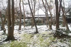 雪の日の祇王寺-1 (nobuflickr) Tags: snow japan kyoto 雪 祇王寺 gioujitemple {vision}:{outdoor}=098 20140214dsc08994