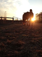 . (Liz.Photography) Tags: trees sunset sky horses horse sun love girl smile grass fence dead photography gold golden gate boots farm air helmet young riding pony hour teenager mustang equestrian goldenhour stables younggirl bridle ourdailytopic horsesarethebest