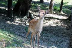you must be new (firreflly) Tags: trees japan kyoto deer nara