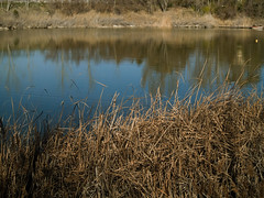 En el lago (_Zahira_) Tags: blue reflection azul lago lafotodelasemana agua olympus reflejo campo laguna nr paja hierba ngr e500 uro