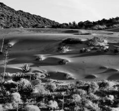 Desierto (F. Nestares (+2.100.000 V)) Tags: bw byn monochrome desierto almería cabodegata dmcl1 cabodegatanijar