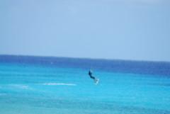 Bonaire 2014 (efusco) Tags: flamingo scuba diving kitesurfing iguana