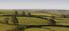 bales (Joe Dunckley) Tags: uk england landscape dorset agriculture bales downland westdorset dorsetdowns fromevalley