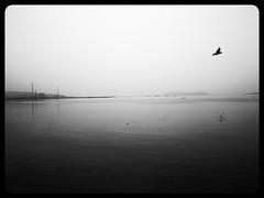 IMG_20140331_105405 (ymankame) Tags: sea sky white black texture horizon surreal s minimalistic seaface