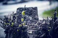 087/365 - Leben (Tekke) Tags: tree berlin germany deutschland leaf nikon 365 blatt baum d800 baumstamm 087365