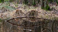 The bow... (stefanh.varberg) Tags: furubergsskogen skog spegling träd