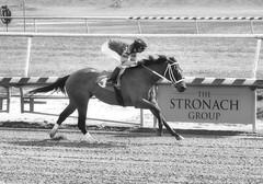 "2017-03-03 (21) r1 Julian Pimentel on #3 I Just Wanna Win (JimFleenor) Tags: photos photography md maryland laurelpark marylandracing horseracing jockey جُوكِي ""赛马骑师"" jinete ""競馬騎手"" dżokej jocheu คนขี่ม้าแข่ง jóquei žokej kilparatsastaja rennreiter fantino ""경마 기수"" жокей jokey người horses thoroughbreds equine equestrian cheval cavalo cavallo cavall caballo pferd paard perd hevonen hest hestur cal kon konj beygir capall ceffyl cuddy yarraman faras alogo soos kuda uma pfeerd koin حصان кон 马 häst άλογο סוס घोड़ा 馬 koń лошадь bw monochrome blackwhite outside outdoors winner julianpimentel"