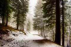 Passeggiata nel bosco..... (Marco Allegro) Tags: winter forest fog nature snow tree lombardy italy