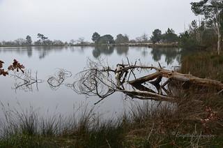 Pas encore un air de printemps sur le réservoir de Saint-Brice (Arès, Bassin d'Arcachon)