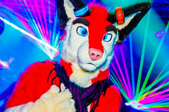 _MG_0606 (Tiger_Icecold) Tags: confuzzled cfz2016 cf2016 furcon furry convention fursuit birmingham party deaddog ddp deaddogparty