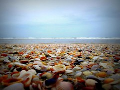 My lucky day! (maneeshathuvanoor) Tags: shells goa monsoon uthorda