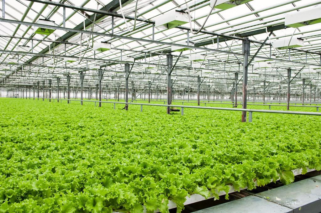 Organic farming vs factory farming essay