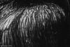 Como piel (Iván R. Cabrera) Tags: tree texture textura mexico arbol bark durango corteza saltito