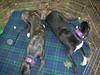 GreyhoundPlanetDay2008047