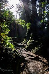 Short Sands Creek Trail (RaminN) Tags: oswaldweststatepark shortsands shortsandscreek smugglercoveoregon