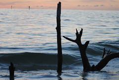Deserted (JunHyu Photography) Tags: ocean wood tree beach water beautiful private dead oak key place secret branches awesome manatee driftwood deadtree longboat sarasota seashore bradenton longboatkey deadoak