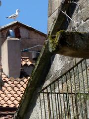 Pontevrdra. Casco Vello 7. Pontevedra. Downtown 7. (Esetoscano) Tags: summer españa spain downtown galicia galiza verano pontevedra cascovello prazadaleña