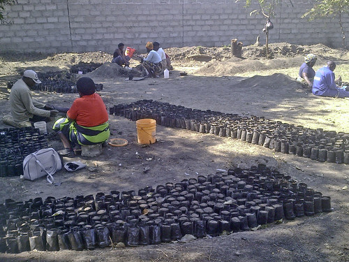 Zambia - Community Group Filling Poly Pots for Savannah Project (iv), Mufulira Town -  July, 2013
