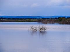 El beso (Jesus_l) Tags: espaa agua europa ciudadreal parquenatural daimiel tablasdedaimiel jesusl