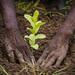 Plantation_arbre