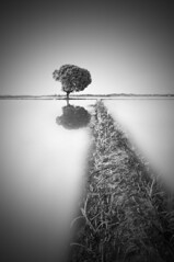just a step away ... (azizazizam) Tags: bw white black tree rice paddy malaysia penang padi minimalist sawah pokok bendang pauh permatang