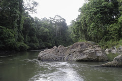 Jungle River (gidovd) Tags: trees tree green nature water rock forest river landscape geotagged rainforest rocks asia may jungle malaysia borneo sabah danumvalley primaryrainforest 2013